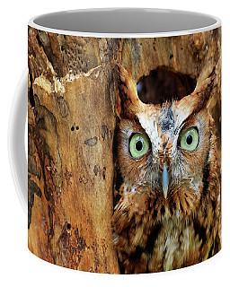 Eastern Screech Owl Perched In A Hole In A Tree Coffee Mug