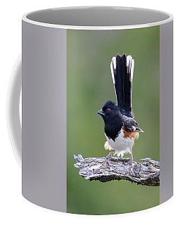 Coffee Mug featuring the photograph Eastern Towhee 50413 by Rick Veldman