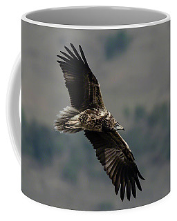 Egyptian Vulture, Sub-adult Coffee Mug