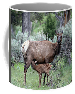 Elk Cow And Calf In Yellowstone Coffee Mug