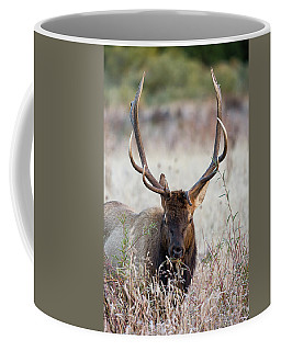 Coffee Mug featuring the photograph Elk Portrait by Nathan Bush