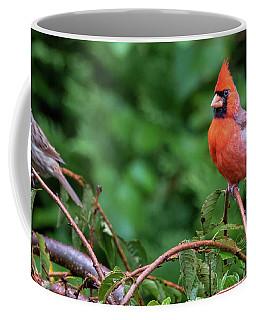 Envy - Northern Cardinal Regal Coffee Mug