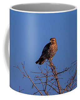 Evening Look Out Coffee Mug