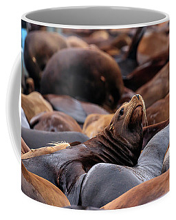 Face Of A Sealion Rises Up From The Colony To Look Around Coffee Mug