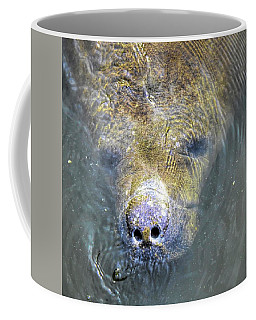 Face Of The Manatee Coffee Mug