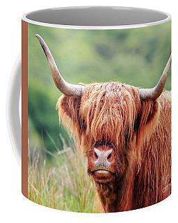 Coffee Mug featuring the photograph Face-to-face With A Highland Cow by Maria Gaellman