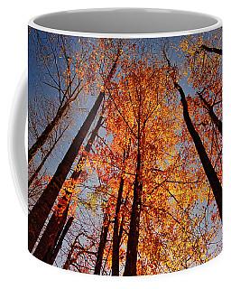 Coffee Mug featuring the photograph Fall Trees Sky by Meta Gatschenberger