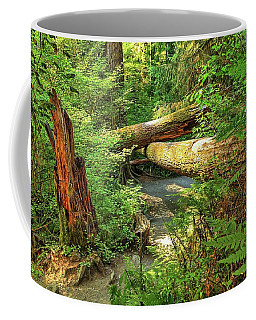 Fallen Trees In The Hoh Rain Forest Coffee Mug