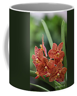 Family Of Orange Spotted Orchids Coffee Mug