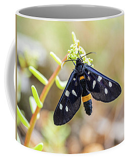 Fegea - Amata Phegea -black Insect With White Spots And Yellow Details Coffee Mug