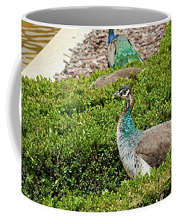 Female Peafowl At The Gardens Of Cecilio Rodriguez In Madrid, Spain Coffee Mug