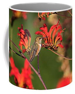 Female Rufous Hummingbird At Rest Coffee Mug