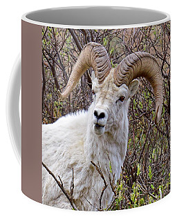 Fire Eyes - Dall Sheep, Denali Coffee Mug