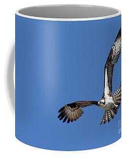 Focused Osprey Coffee Mug