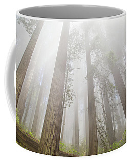 Fog In The Redwoods Coffee Mug