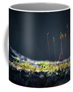 Coffee Mug featuring the photograph Follow by Michelle Wermuth