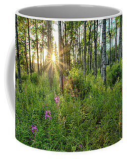 Coffee Mug featuring the photograph Forest Growth Alaska by Nathan Bush