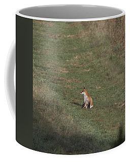 Fox Bsking In The Sun 1 Coffee Mug