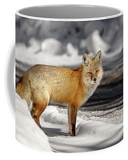 Coffee Mug featuring the photograph Fox Close Up by Ronnie and Frances Howard