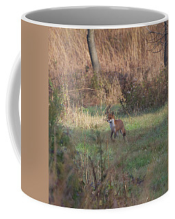 Fox On Prowl Coffee Mug