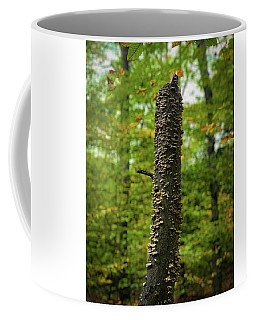 Coffee Mug featuring the photograph Fungus Among Us by Lora J Wilson