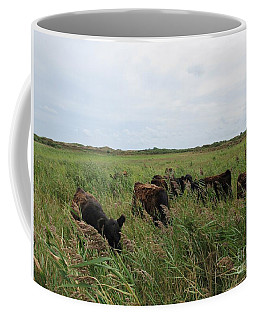 Galloway Cows On Texel North Holland Coffee Mug