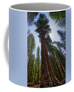 Coffee Mug featuring the photograph Giant Sequoia Tree by Andy Konieczny