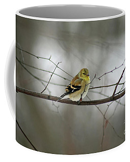Goldfinch In Winter Looking At You Coffee Mug