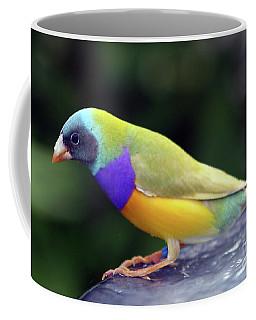 Coffee Mug featuring the photograph Gouldian Finch?  by PJ Boylan