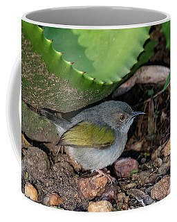 Gray-backed Camaroptera Coffee Mug