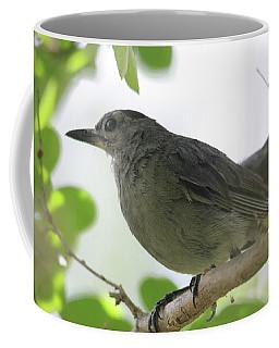 Coffee Mug featuring the photograph Gray Catbird by Trina Ansel