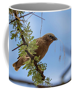 Gray-headed Social Weaver Coffee Mug