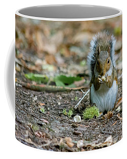 Coffee Mug featuring the photograph Gray Squirrel Stood Upright Eating A Nut by Scott Lyons
