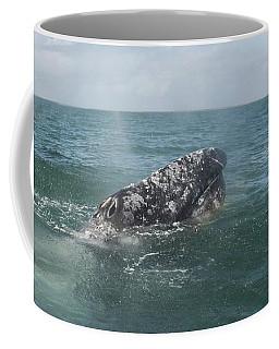 Gray Whale In Bahia Magdalena Coffee Mug