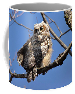 Coffee Mug featuring the photograph Great Horned Owlet 42915 by Rick Veldman