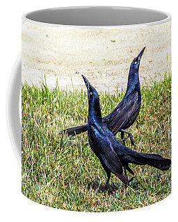 Great-tailed Grackles Looking Up Coffee Mug