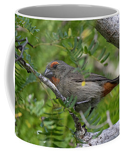 Greater Antillean Bullfinch Coffee Mug