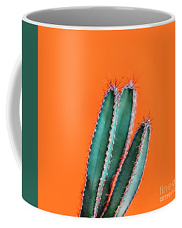 Green Cactus Closeup Over Bright Orange Pastel Background. Color Coffee Mug