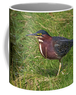 Coffee Mug featuring the photograph Green Heron Up Close by Ricky L Jones