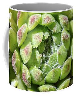 Green Sempervivum Top Down Close Up Coffee Mug
