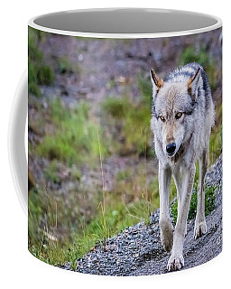 Grey Wolf In Denali National Park, Alaska Coffee Mug