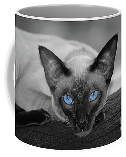 Hey There Blue Eyes - Siamese Cat Coffee Mug