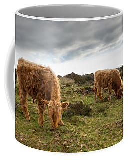 Highland Cattle Feeding At Baslow Edge Coffee Mug