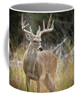 Hill Country Whitetail Coffee Mug