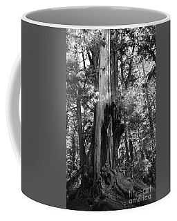 Historic Cedar Coffee Mug