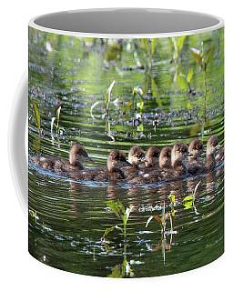 Hooded Merganser Ducklings Dwf0203 Coffee Mug