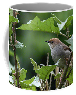 Hunter's Cisticola Coffee Mug