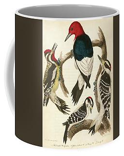1. Red-headed Woodpecker. 2. Yellow-bellied Woodpecker. 3. Hairy Woodpecker. 4. Downy Woodpecker. Coffee Mug
