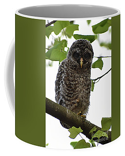 Immature Barred Owl Coffee Mug
