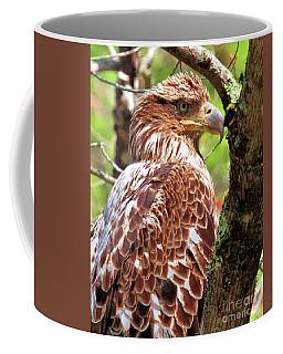 Immature Eagle Coffee Mug